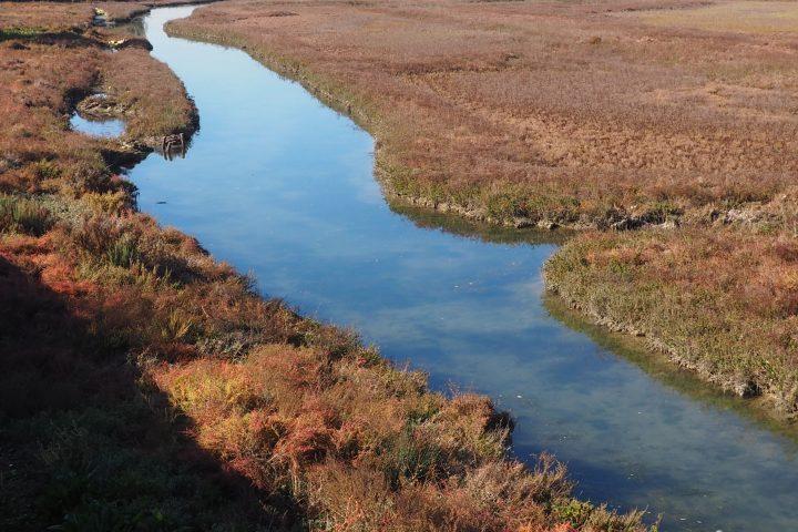 kleine Kanäle und Salzwiesen um die Pestinsel Lazzaretto Nuovo, November 2020