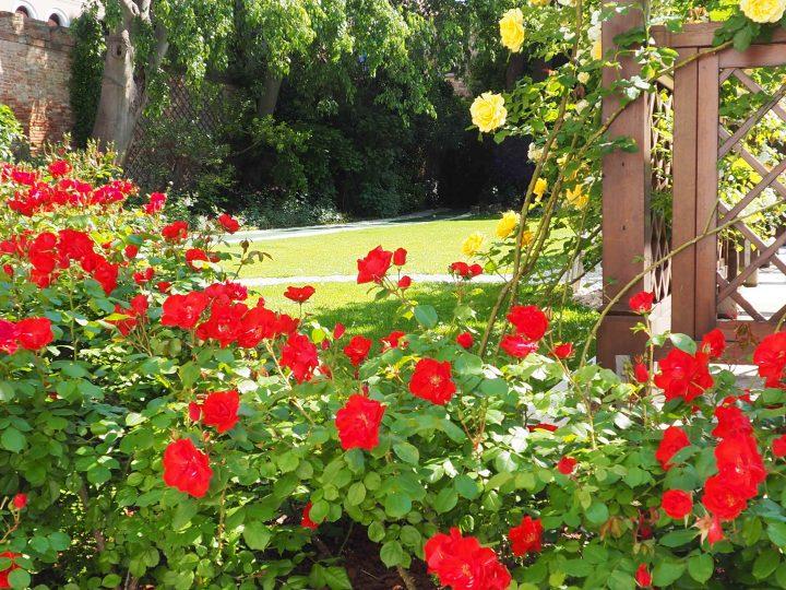Rosen, Rosen und wieder Rosen